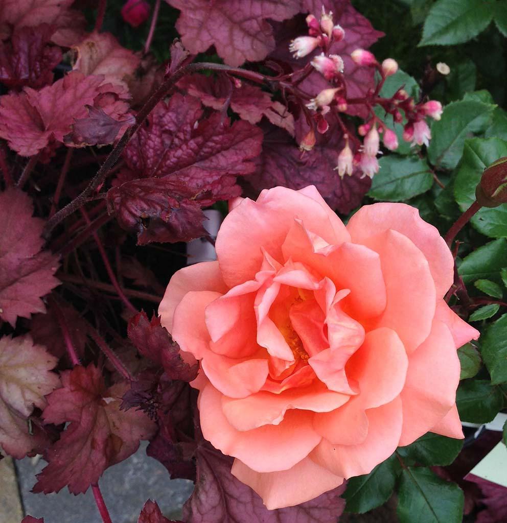 Flower Garden Design Lincoln NE