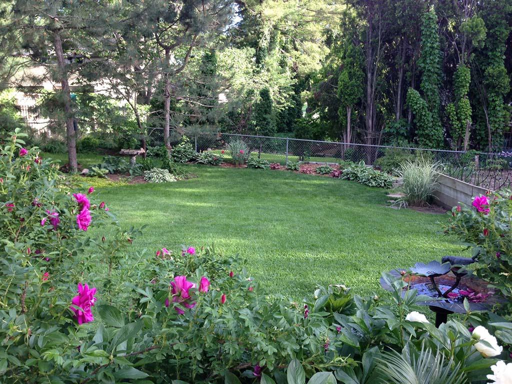 Pink Rugosa Garden Design Lincoln