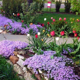Tulips Garden Lincoln NE